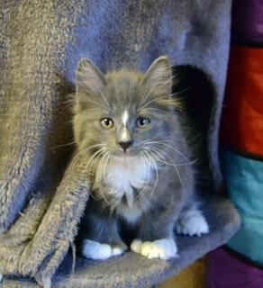 Mikrosiru Kissa