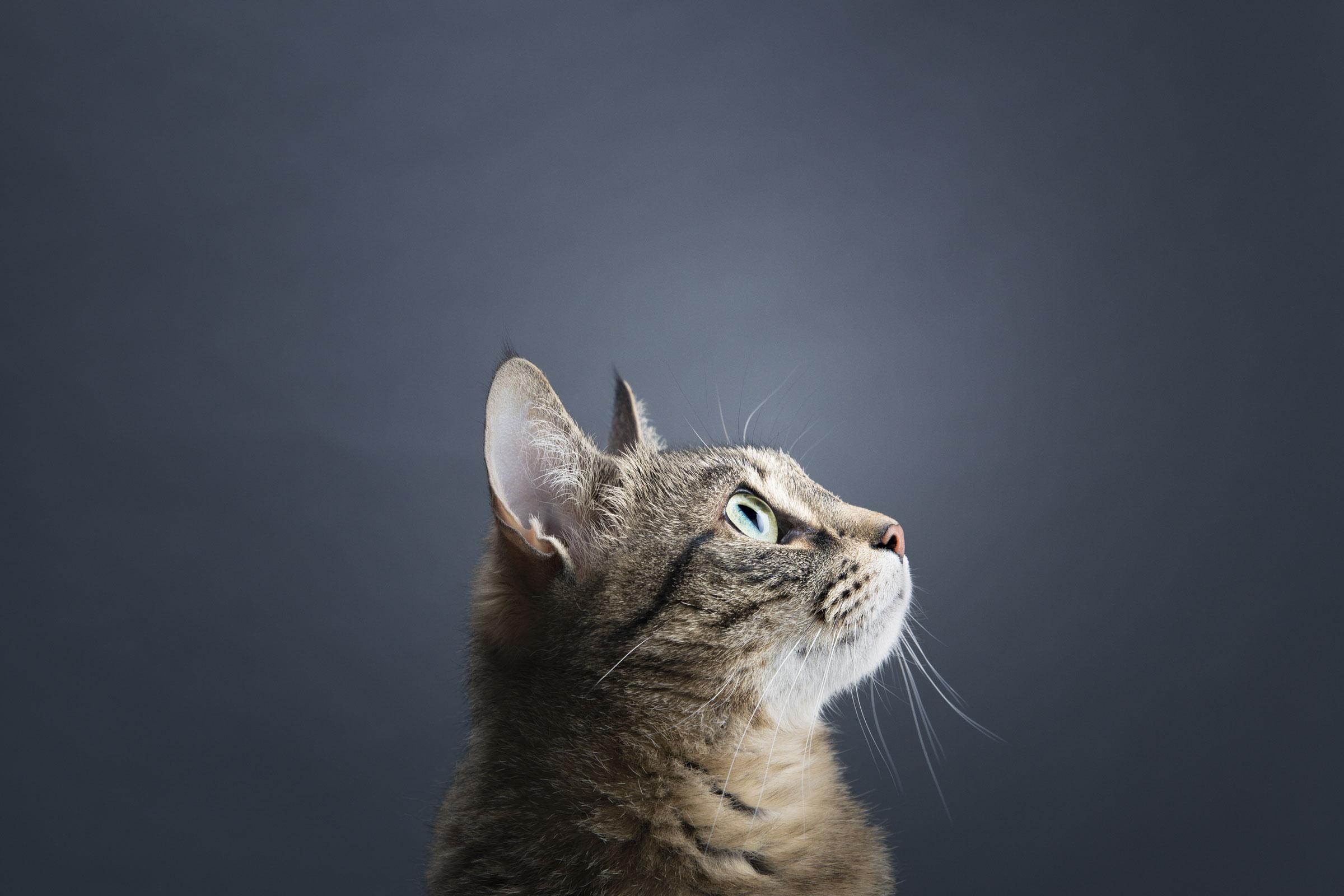 Rekku Rescue Etusivun kissa
