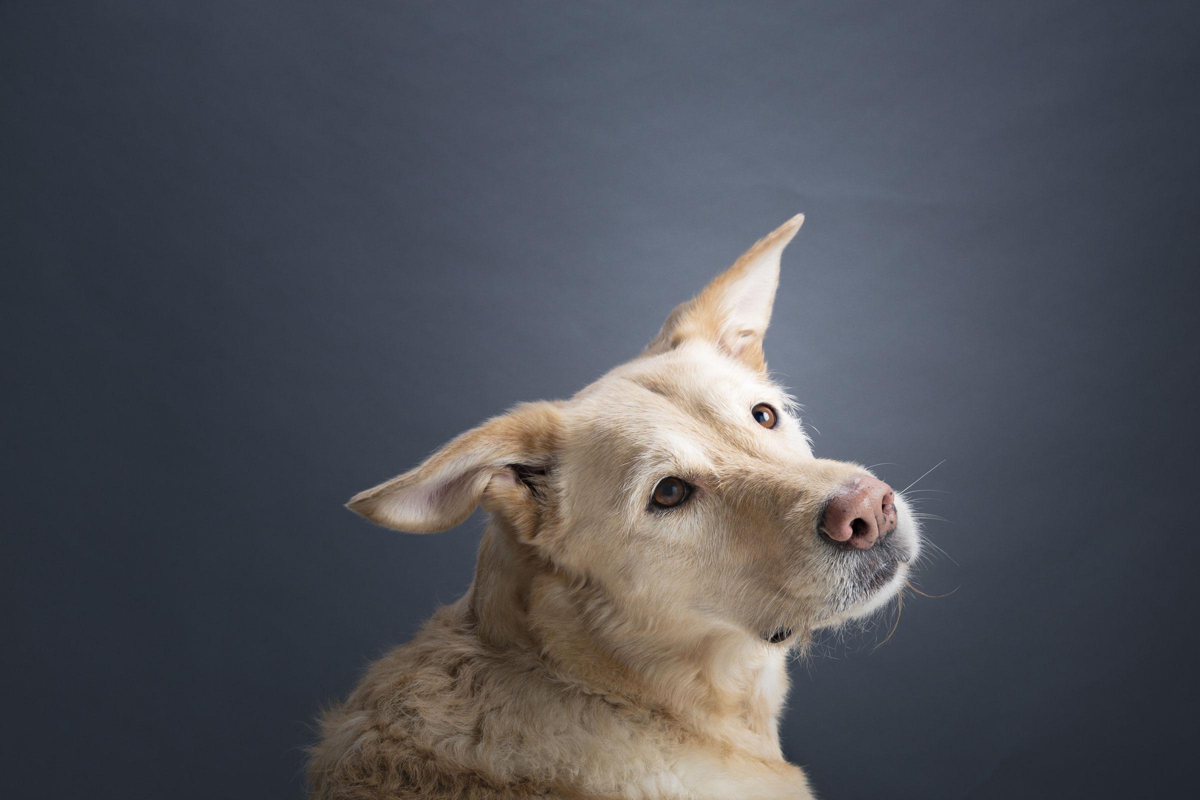 Rekku Rescue Etusivun koira